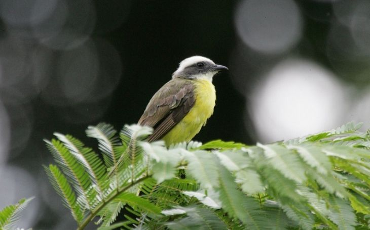 Best Birding in Costa Rica